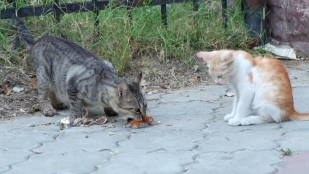 Stray cats eating scraps of chicken