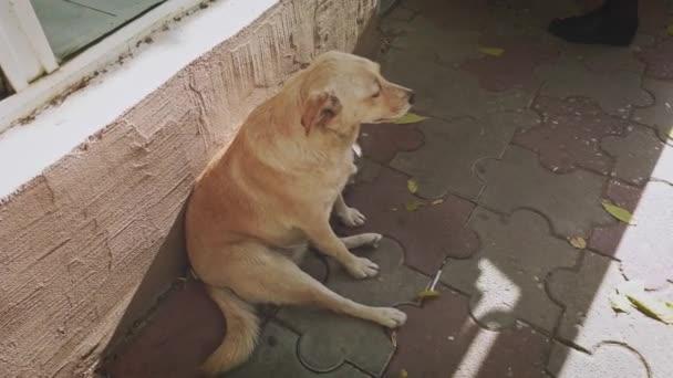 streunender Hund einsam auf der Straße sitzend