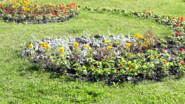 Colourful Flowerbed and Grass Lawn in an Garden