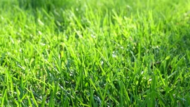 grünes frisches Gras als schöner Filmhintergrund