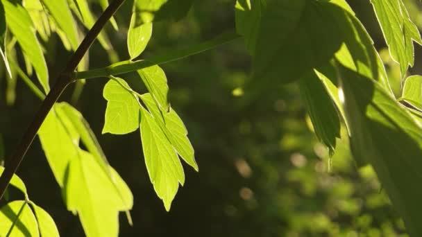 Zelené listy s sluneční podsvícení