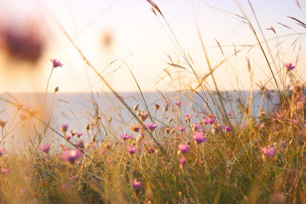 Dry grass and violet wildflowers near sea