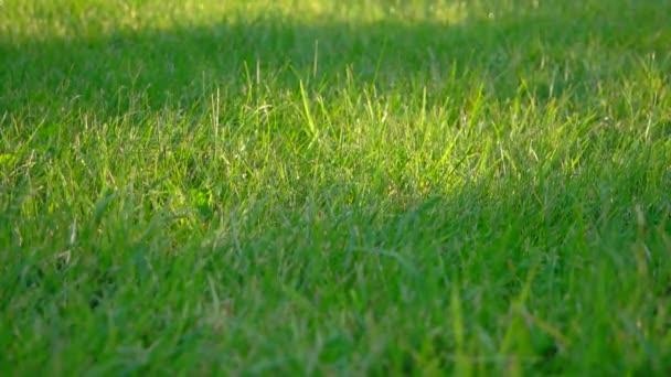 Friss zöld fű