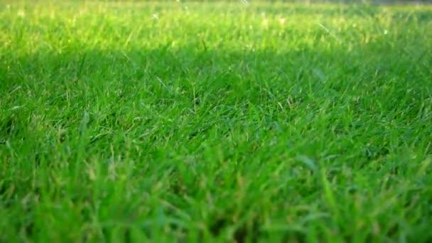 kapky vody padají na zelené trávě