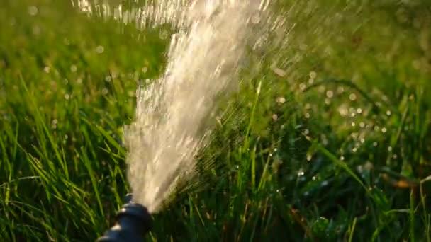 Zalévání zahrady. Šéf potrubí s tokem vody rozlévají podsvícený slunce