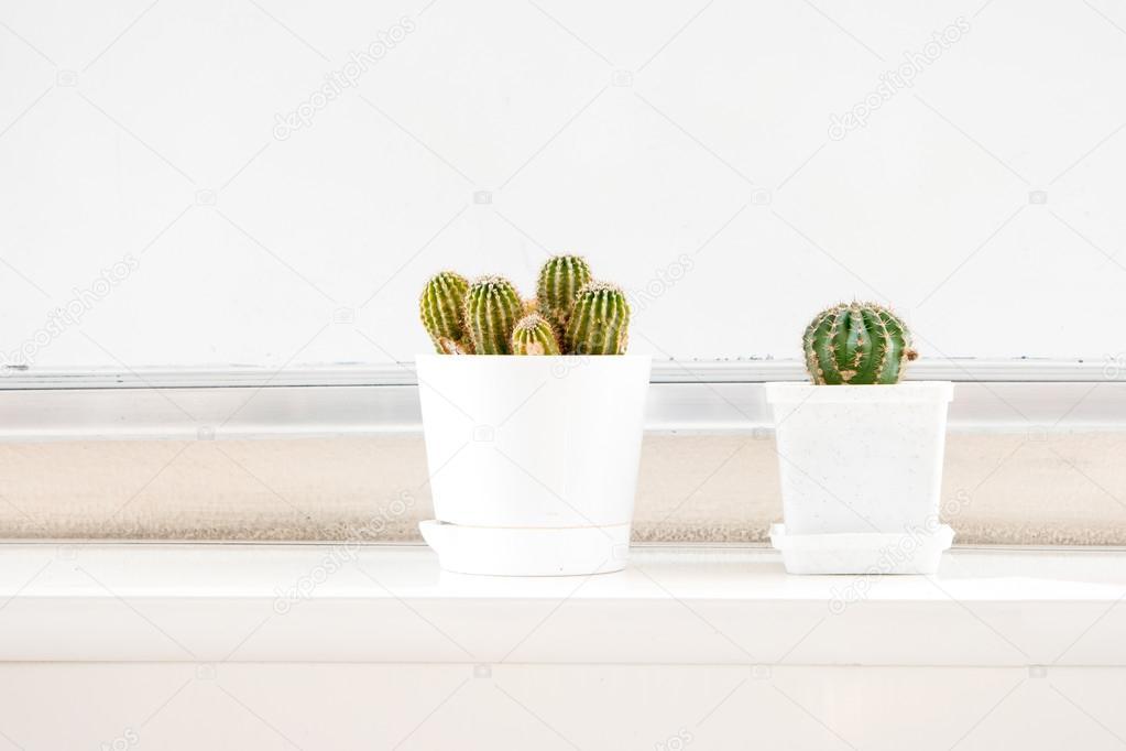 Zwei Kakteen In Weissen Topfen Auf Der Fensterbank Und Viel Platz Fur