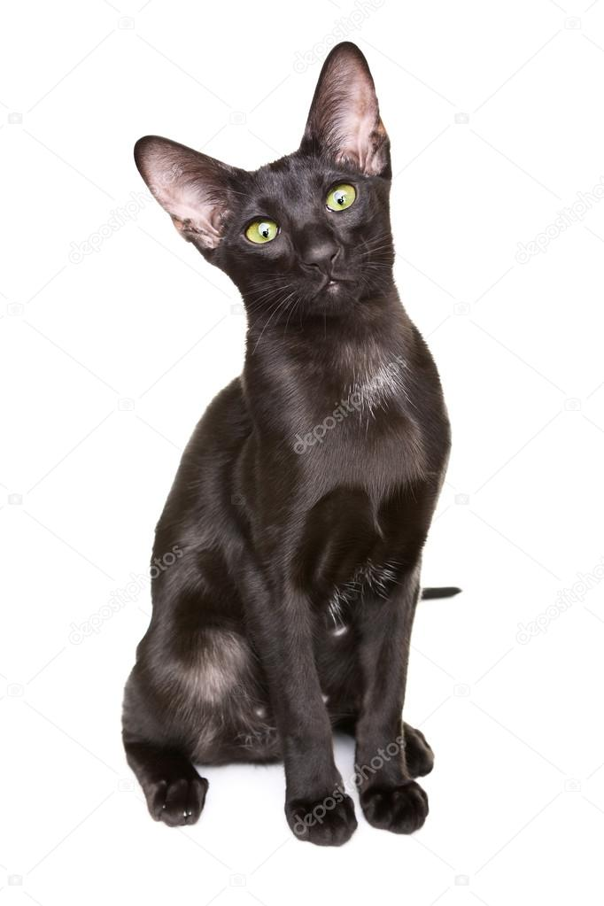 warrior cats series in order