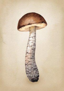 Watercolor illustration of a mushroom