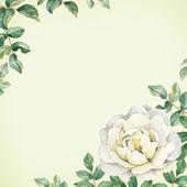 Fotografie Akvarel růže květ