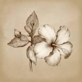Rajz, Hibiszkusz virág