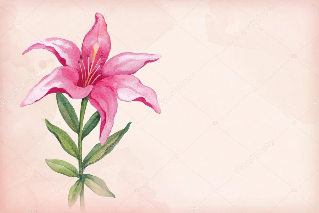 Dibujos Flor De Lis Ilustración Acuarela De La Flor De Lis Foto