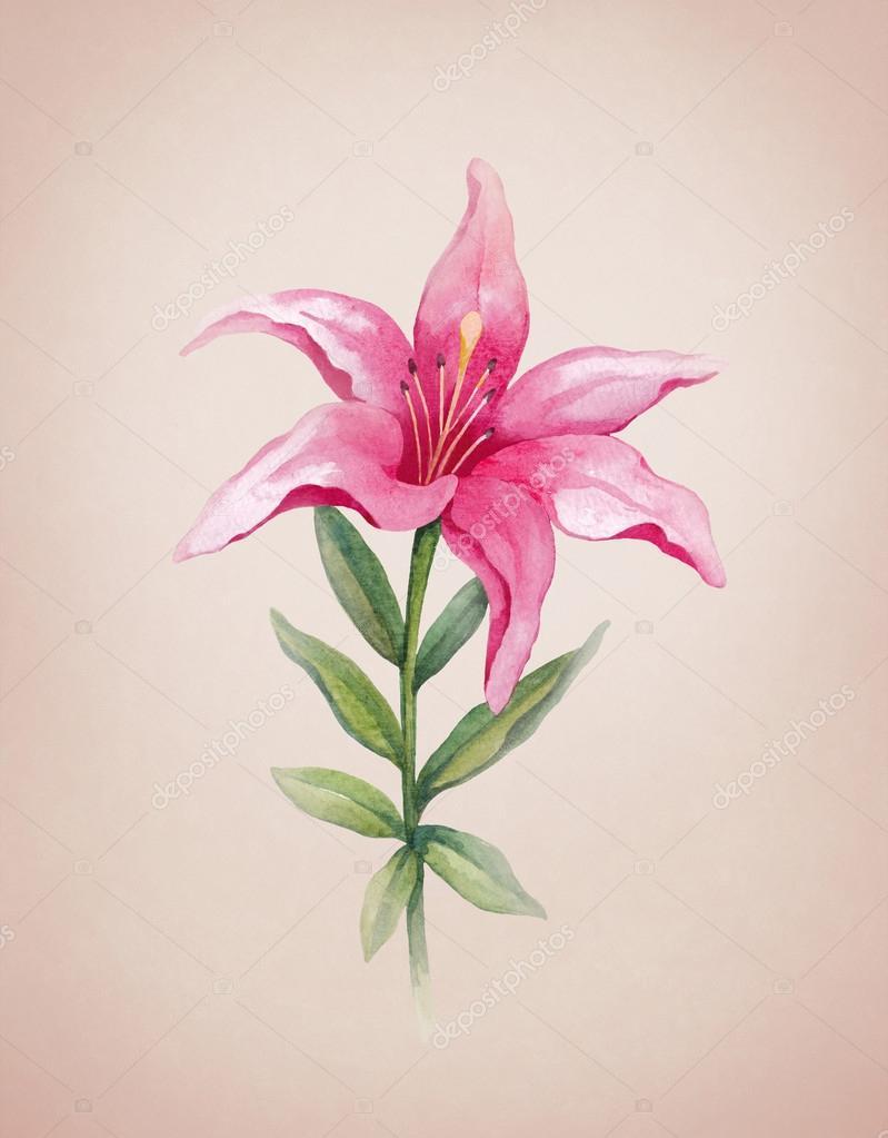 Ilustración Acuarela De La Flor De Lis Ideal Para Coche De