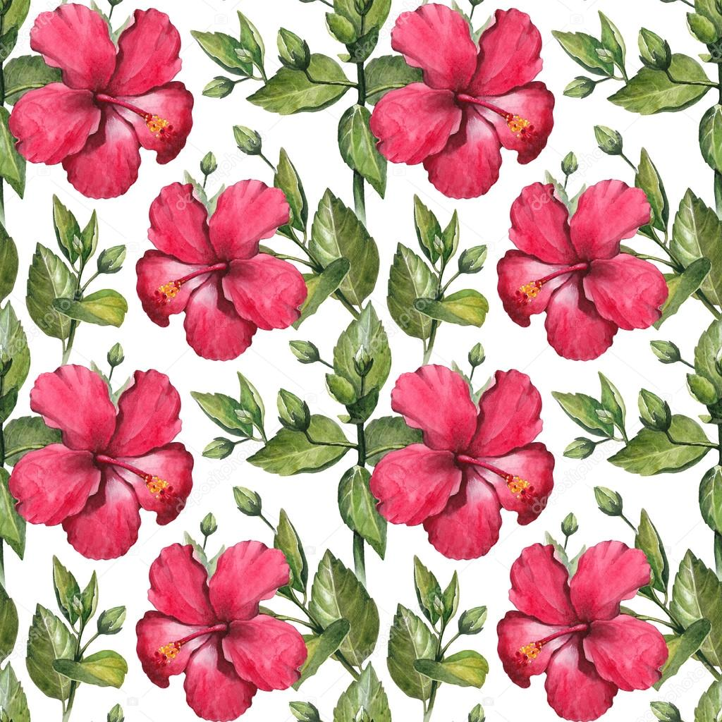 Dessin de fleurs d 39 hibiscus aquarelle photographie - Dessin d hibiscus ...