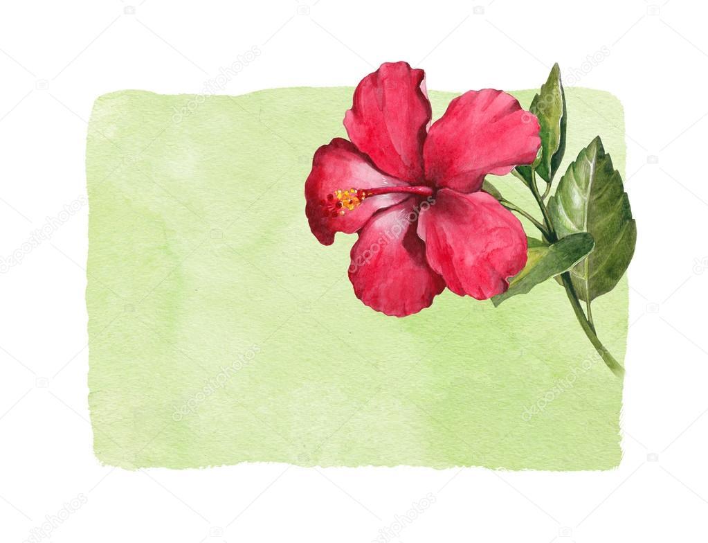 Watercolor hibiscus flower stock photo sashsmir 59831935 watercolor hibiscus flower stock photo izmirmasajfo