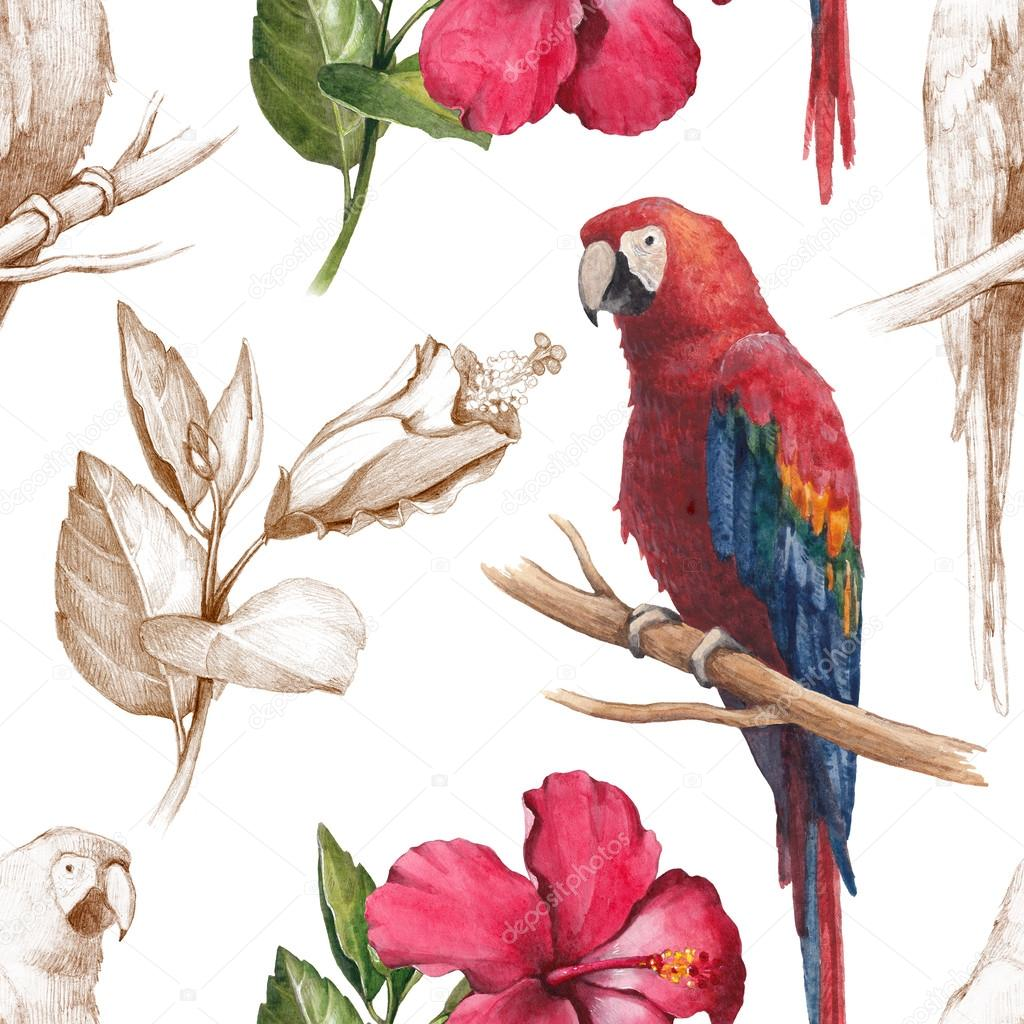 Macaw and hibiscus flower drawings stock photo sashsmir 59832517 macaw and hibiscus flower drawings stock photo izmirmasajfo