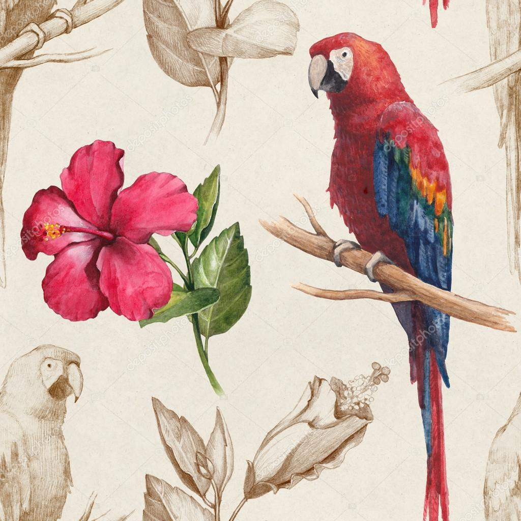Macaw and hibiscus flower drawings stock photo sashsmir 59832735 macaw and hibiscus flower drawings stock photo izmirmasajfo