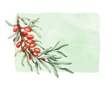 Watercolor sea buckthorn illustration