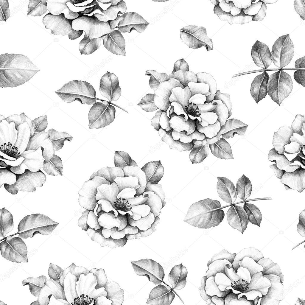 Modello senza cuciture con disegni a matita di fiori for Disegni di fiori a matita