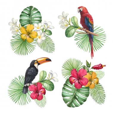 Watercolor illustrations of tropical flowers and birds