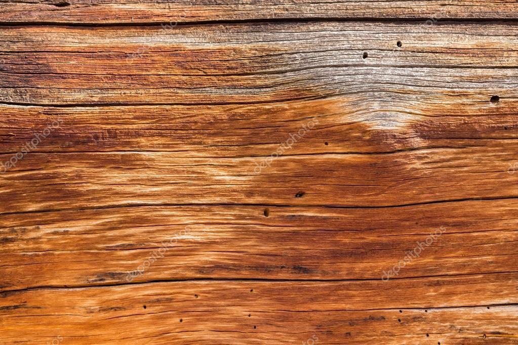 sfondo vicino tronco legno di cedro — Foto Stock © steveheap #52301707