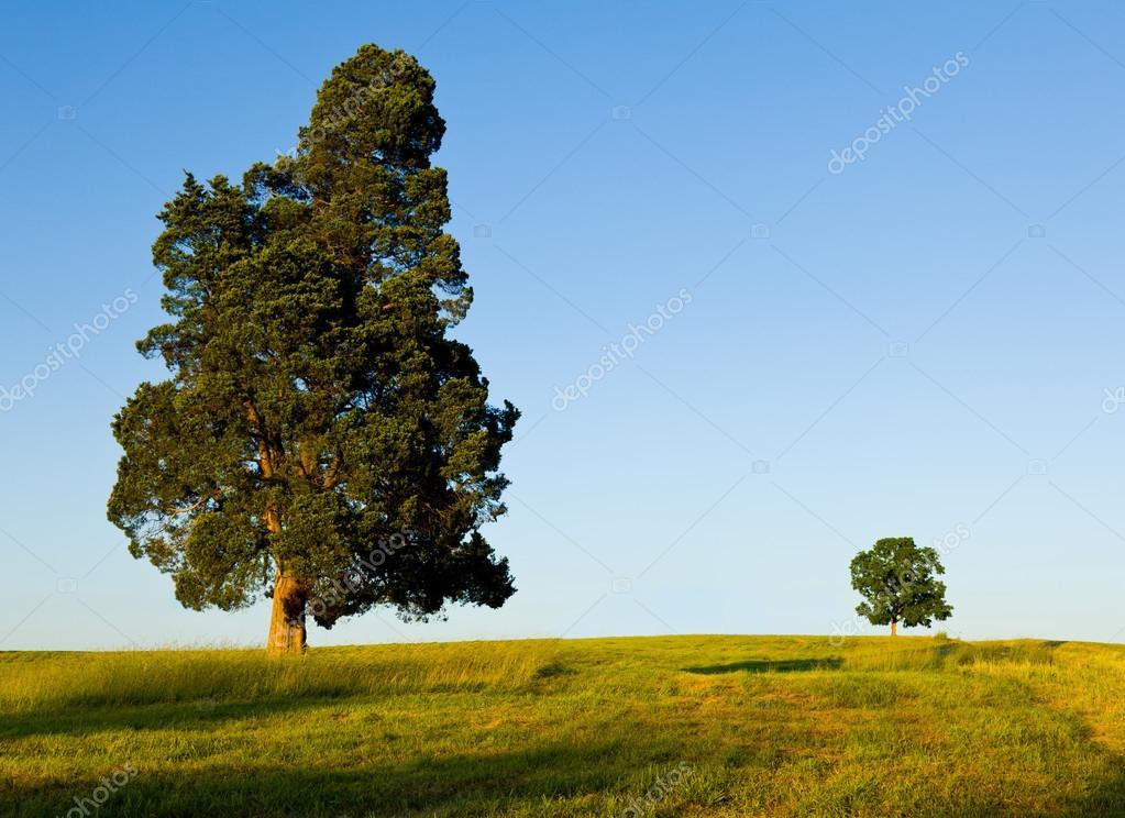 Large tree dominates small tree on hillside