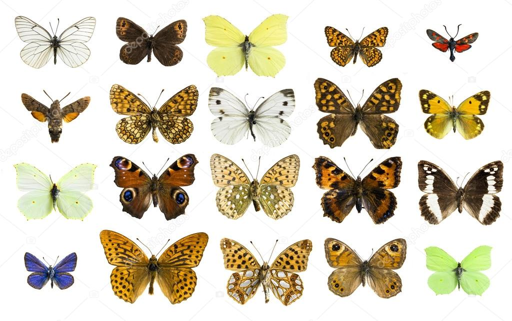 collage different butterfly species stock photo immfocus 105418810