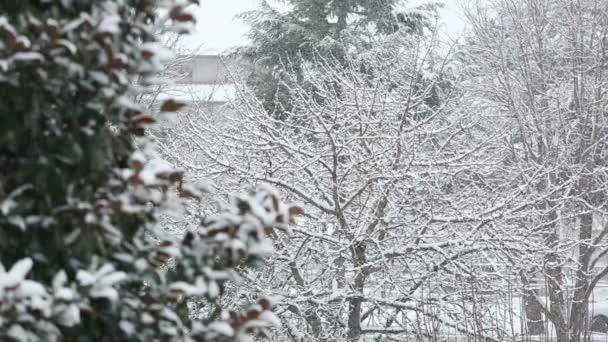 Zimní krajina s padající sníh