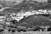 Fotografia Borgo circondato da vigneti
