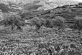 Fotografia Vigneti e olivi