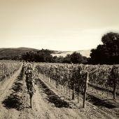 Fotografia uva in autunno