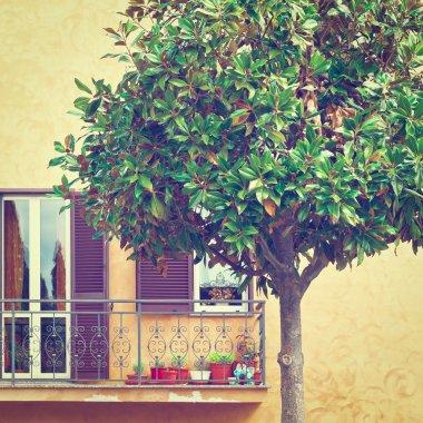 Ornamental Tree in Italy
