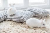 pěkný králíků s polštáři