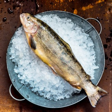 fresh fish in ice