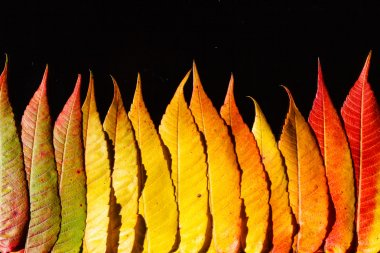autumn color leaves