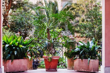 terrace with plants in pots