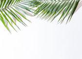Fotografie areca palm leaves
