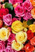 Fotografie rosa blumen