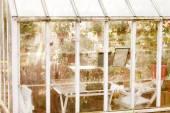 Bílá zahrada skleníku