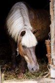 Fotografie koně ve stáji
