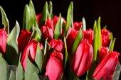closeup di tulipani rossi
