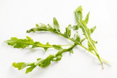 fresh green arugula leaves