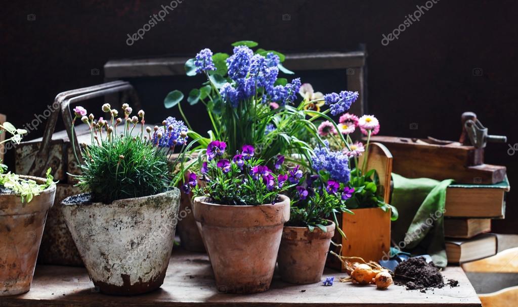 Sprężyny Purpurowe Kwiaty W Doniczki Zdjęcie Stockowe