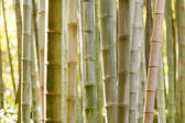 Bambusové stonky Les