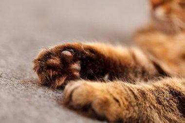 nice cat paws