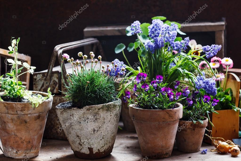Spring Flowers In Pots Stock Photo C Shebeko 76702457