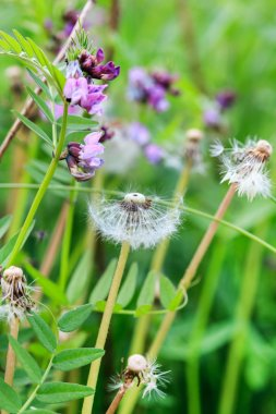 beautiful field flowers