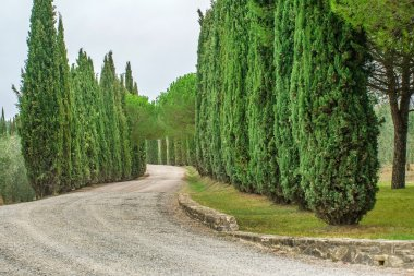 Country road through green trees stock vector