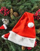 Fotografie Santas hat on fir tree