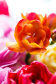 Bunch of beautiful colorful flowers