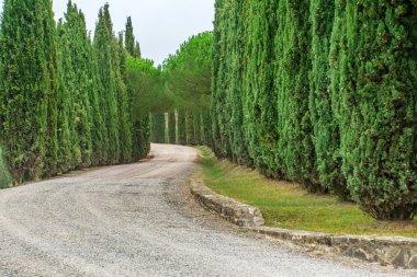 Road with trees in italian Toscana stock vector